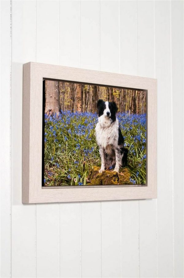 Prima Framed Stretched Canvas Prints - Photography and Fine Art